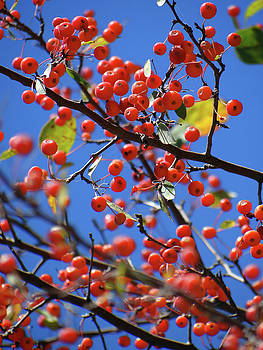 Berry Bunches by Jamie Johnson