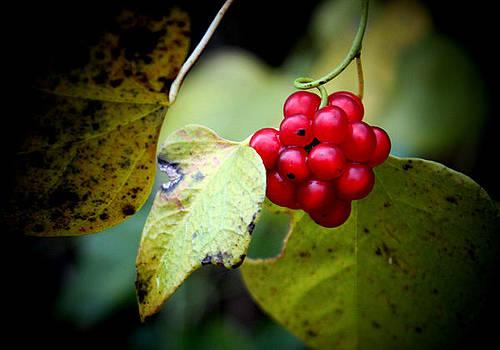 Karen Scovill - Berry Nice