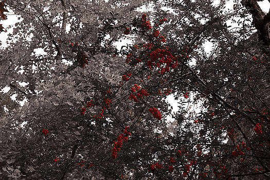Berry Trees by Bill Ades