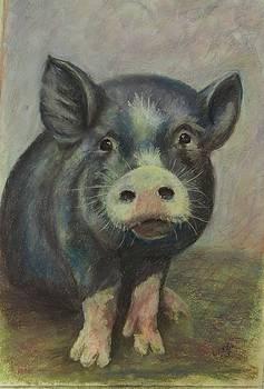 Bertie - a blue pig by Elizabeth Ellis