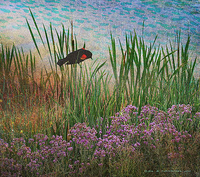 Beside The Pond Redwing Blackbird by R christopher Vest
