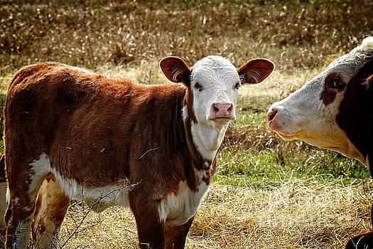 Best Mom on the Ranch by Ella Kaye Dickey
