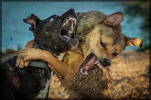 Besties by Janice Bennett