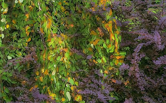 Beth's Swirling Katsura Tree by Saxon Holt