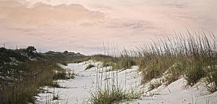 Judy Hall-Folde - Between the Dunes