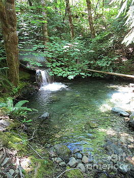 Beyond the end of the trail at Limpy Creek by Marie Neder