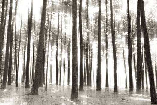 Beyond The Trees - Ocean County Park by Angie Tirado