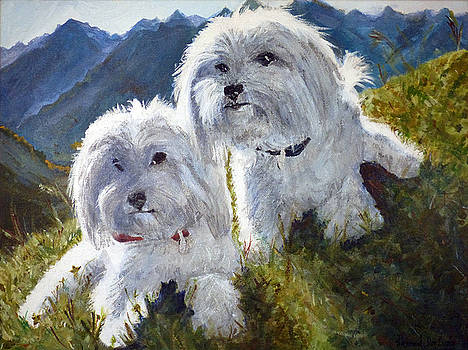Simba and Bobby the Bichon Frises by Karen Dortschy