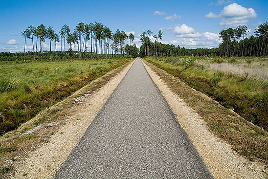 Sami Sarkis - Bicycle track passing through the Landes forest