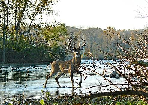 Big Beautiful Buck by Susan Olga Linville