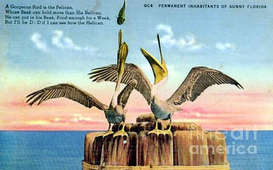 Big Bill Pelican Vintage Postcard.  by Jennifer Capo