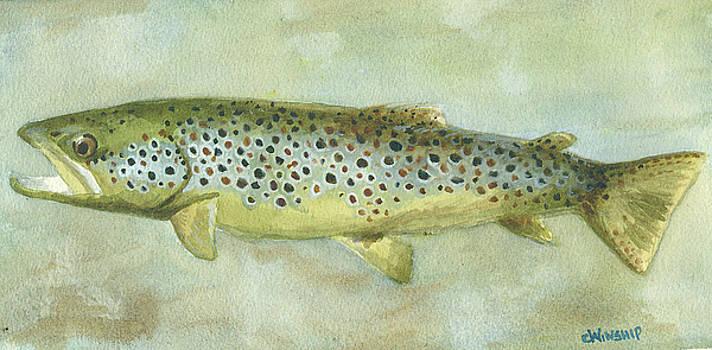 Big Brown by Christine Winship