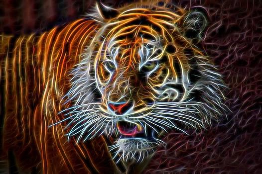 Big Cat by Aaron Berg