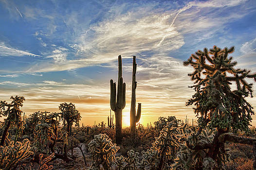 Big Cholla Sunset by Ryan Seek