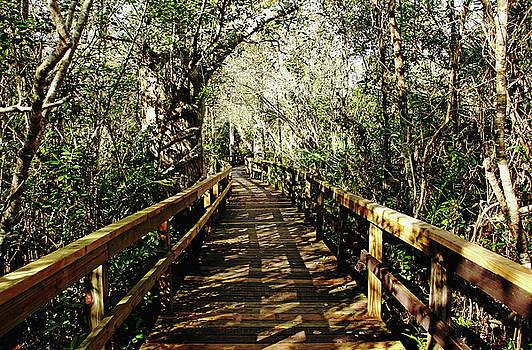 Big Cypress Bend Boardwalk by Debbie Oppermann