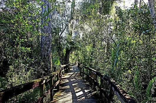 Big Cypress Bend Boardwalk II by Debbie Oppermann