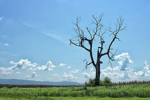 Big Dead Tree by Tammy Chesney