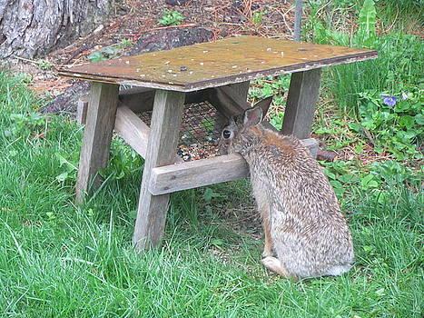Betty Pieper - Big Eyed Rabbit Eating Birdseed