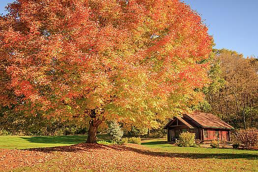 Big Fall Tree by a Cabin by Joni Eskridge