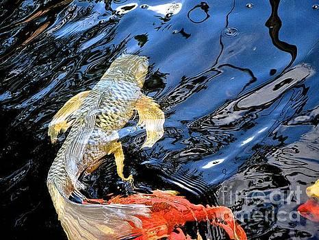 Big Fish by Jason Layden