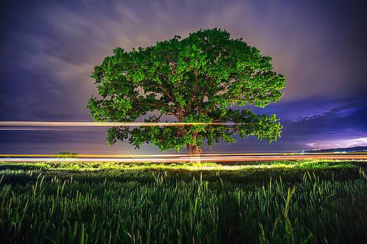 Big green tree at night by Valentin Valkov