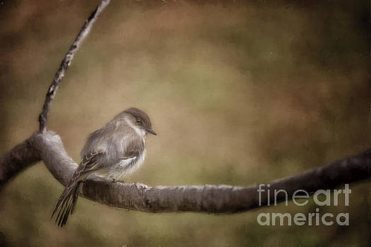Big Headed Flycatcher by Linda Blair