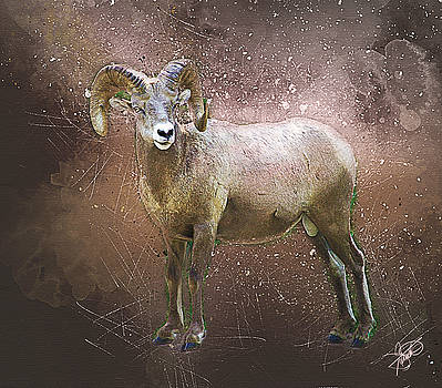 Big Horn Sheep by Tom Schmidt