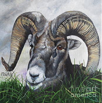 Big Horned Sheep by Marilyn McNish