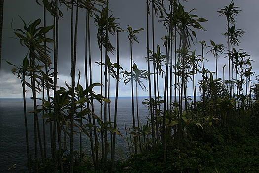 Big Island View by Cheryl Lynn Johnson