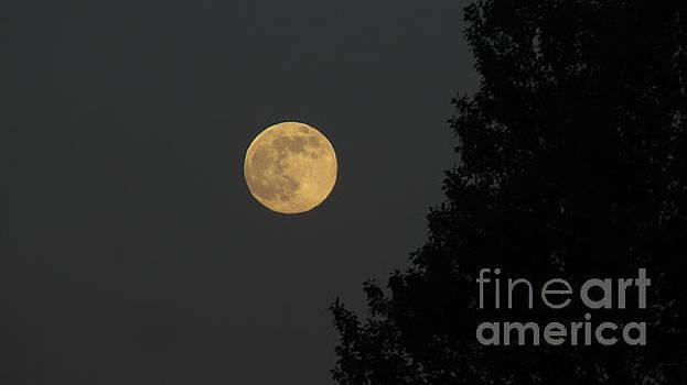 Big Leaf Moon by Janice Westerberg