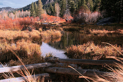 Big Meadow Creek Fall by Larry Darnell