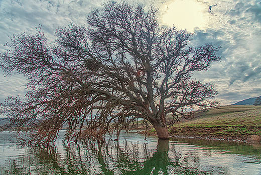 Big Oak in Water by Marc Crumpler