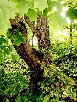 Big Old Tree by Deborah MacQuarrie-Selib