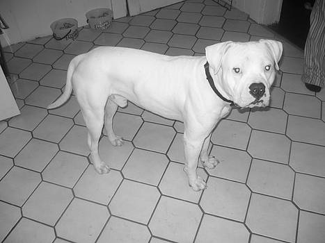 Big Pup by Emma Sechrest