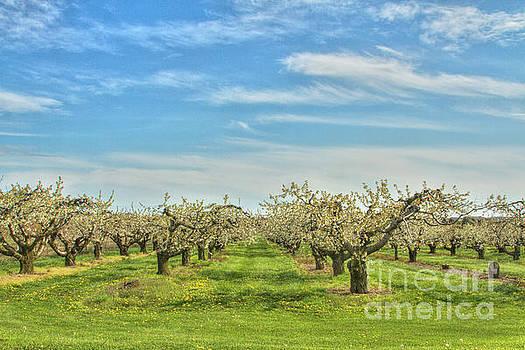 Big Sky Orchard by Marilyn Cornwell