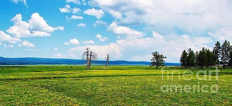 Big Summit Prairie in Bloom by Michele Penner