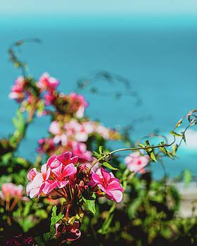 Big Sur Flowers by Christopher Petro