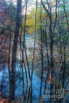 Bob Phillips - Big Thicket Water Reflection