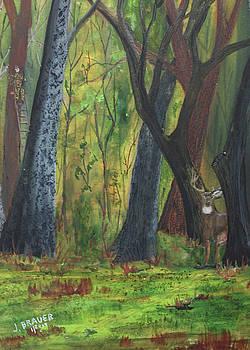 Big Timber Buck by Jack G Brauer