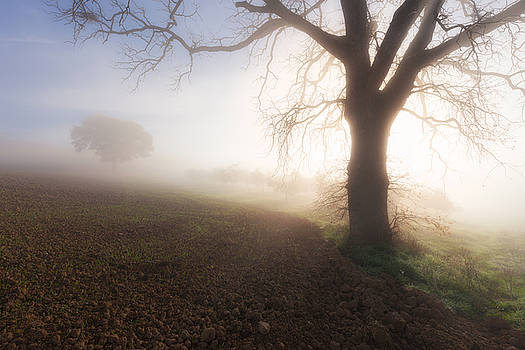 Big tree in a fog by Nickolay Khoroshkov