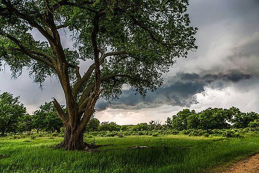Big Tree by Sean Ramsey