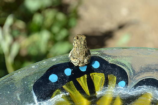 Big World Little Toad by Jasmin's Treasures
