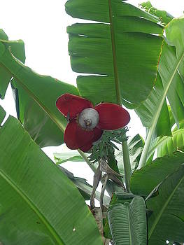 Biggest Herb by Karuna Ahluwalia