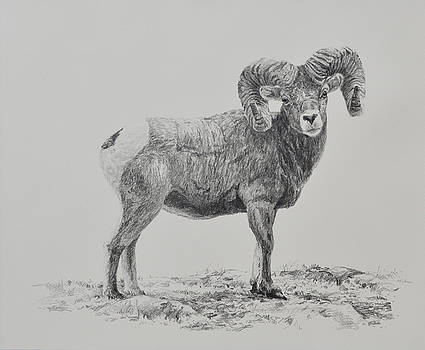 Bighorn by Jim Young