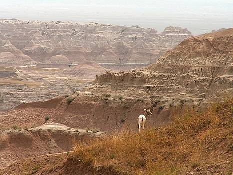 Bighorn Sheep in the Badlands by Theresa Willingham