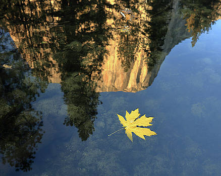 Bigleaf Maple Leaf and El Capitan Reflection, Mariposa County, C by Troy Montemayor