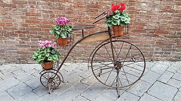 Bike Art - Siena, Italy by Joseph Hendrix