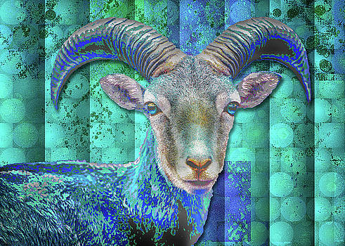 Billy Goat Blue by Mimulux patricia No