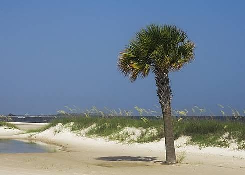 Biloxi Palm by Thomas DiVittis