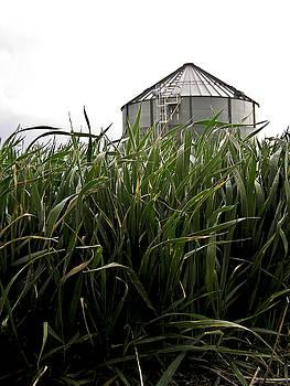 Bin Behind the Wheat by Kelli Chrisman